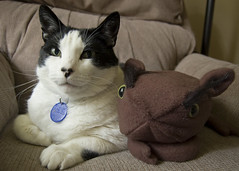 Bilbo the Cat and His Gorgalthumper Pal