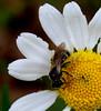 DSC_0620 (Sherwan™) Tags: flower macro nature nikon kurdistan seo watcher kurd sherwan 28300 d40x