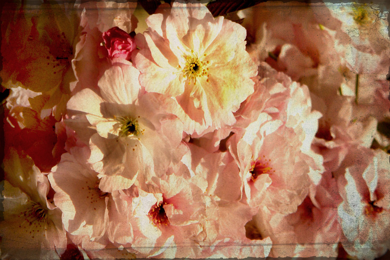 vintage fleur