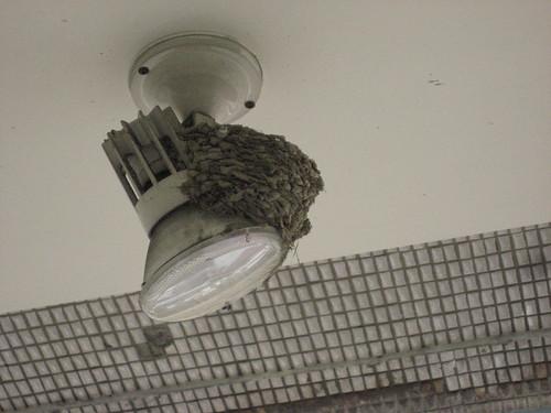 燈上的燕巢