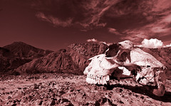 Earth's future? (Jesús VR) Tags: sky españa nature sepia canon landscape geotagged 350d skull spain europa europe desert earth paisaje andalucia cielo future desierto andalusia almeria almería calavera craneo tabernas canonista tokina1224atx indalofoto jesusvr