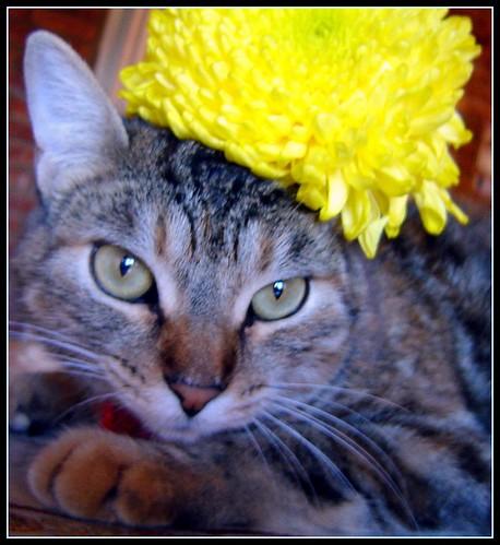 Mia y el crisantemo amarillo