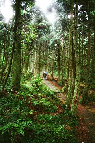 很不錯的森林