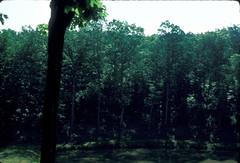 The Big Pond (RLBeaton) Tags: oldfamilyphotos laureltongreenhouses auntmarysslides