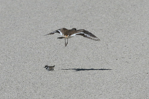 Killdeer Crossing