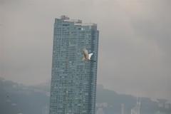 , , Hong Kong,  Kai Tak Airport, 1925-1998, , kowloon Bay,  Kowloon East,  Collection, kklkong, __156 (kklkong) Tags: hongkong collection  kowloonbay kaitakairport kowlooneast  kklkong 19251988