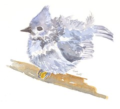 baby tufted titmouse (loveitaly) Tags: baby bird art moleskine watercolor painting sketch sketchbook titmouse tufted fledgling