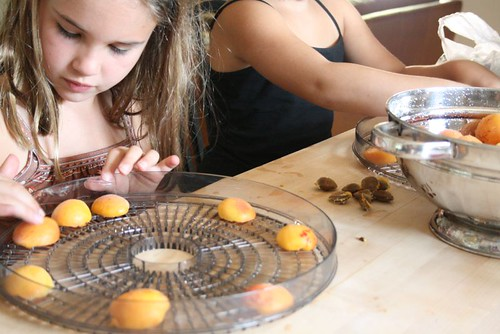 processing apricots for the dehydrator