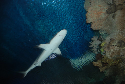 The Shark Reef at Mandalay Bay