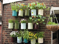 The backporch garden (Jenny Darling) Tags: flowers plants gardening edibleflowers guerillagardening containergardening