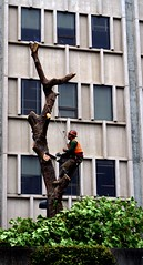 Tree Chopping at University