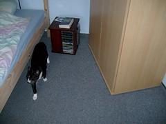 Moritz Day # 135 / 365 17. Juli 2008 (renee.hawk) Tags: pet cat kitten kitty moritz oneobject365daysproject