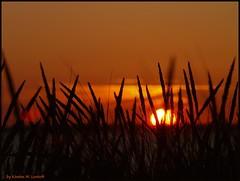 Hidden sunset (Kirsten M Lentoft) Tags: sunset beach grass denmark silhouettes youmademyday bej momse2600 diamondclassphotographer flickrdiamond frhwofavs goodnightdearest mmmmuuahhhhhhhh kirstenmlentoft
