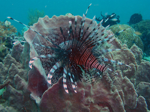 Lionfish by John & Pam Owens.