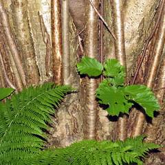 Vegetasjon - Vegetation (erlingsi) Tags: summer nature norway square landscapes norge sommer natur noruega oc paysage sq 6100 noorwegen noreg mreogromsdal erlingsi erlingsivertsen firkantet  voldabackstage ikulissne ikulissene