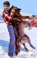 Sarah's Wilderness (Gwynedd) Tags: snow america airplane wolf kill hunting agony bluesky helicopter slaughter chase environment bloody wilderness shotgun campaign bounty wolves mccain hunt runningmate disrespect campaign2008 assaultrifle youtube defendersofwildlife americanpolitics sarahpalin bountyhunting deadwolf vpcandidate mccainpalin sarahbarracuda wolfhunting governorbarbie pitbullwithlipstick klondikebarbie aerialwolfhunting helicopterhunting biblespice
