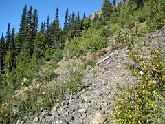 13 - Nice trail