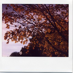 fall is beautiful, we know (julia:elise) Tags: red sun yellow polaroid boots sunny crisp spectra leavesfalling corduroyjacket abeautifulevening beneathmyfeet afallwalk andrustling