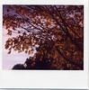 fall is beautiful, we know (julia:elise) Tags: red sun yellow polaroid boots sunny crisp spectra leavesfalling corduroyjacket abeautifulevening beneathmyfeet afallwalk andrustling