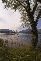Lake Kawaguchi in the Morning (aeschylus18917) Tags: japan yamanashi kawaguchilake nature kawaguchiko nikon d700 danielruyle aeschylus18917 danruyle druyle landscape scenery ダニエルルール ダニエル ルール mountfuji 富士山 fujisan yamanashiprefecture 山梨県 yamanashiken lake mountain 日本 pxi pxt