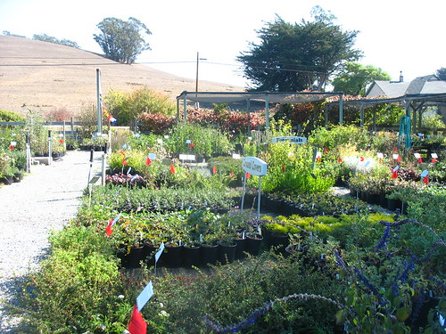 Mostly Natives Nursery, Tomales, CA