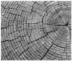 Log (veyoung52) Tags: wood blackandwhite bw log patterns gimp veyoung52