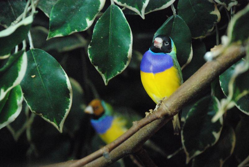 Zoo Maia 035