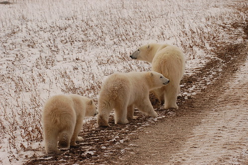 Following mum