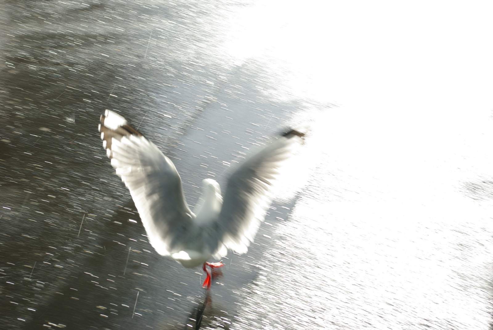 Shiny Happy Seagull