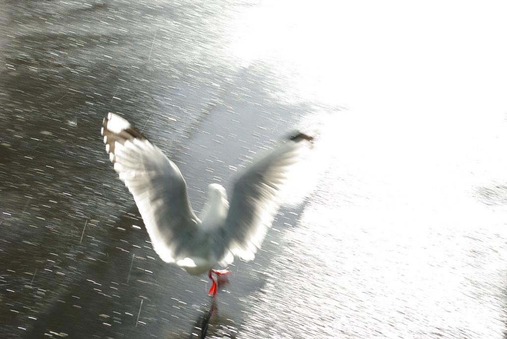 Shiny Happy Seagull