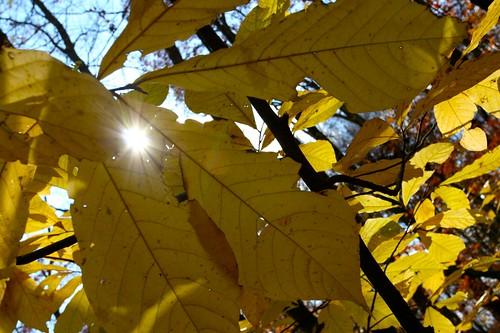 Waning Sunlight