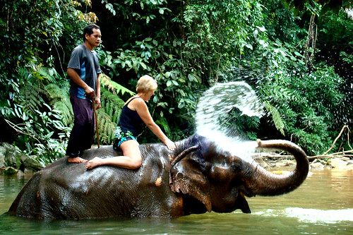 Mom's Elephant