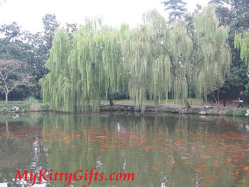 Hello Kitty's View of a Large School of Red Fishes in Red Carp Lake of Peony Garden, HangZhou