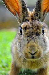 everybody loves them bunnies