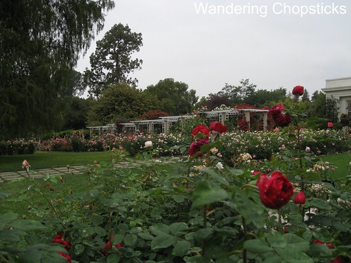 The Huntington Library, Art Collections, and Botanical Gardens (Rose Garden) (Spring) - San Marino 7