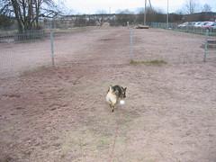 IMG_2238 (Niina J.) Tags: eläimet koirat osmo