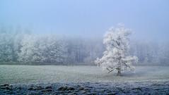 Tree Frost II