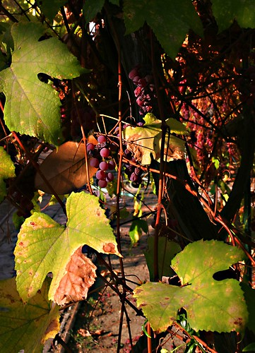 2/365 Grapes