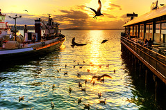 Golden Bird Dance (Surrealize) Tags: ocean seattle light sunset sea sky orange sun green bird clouds fire gold pier boat washington dance nikon waterfront seagull flight wharf pugetsound rays hungry feed 54 elliotbay fishbar firestation3 d700 surrealize ivar'soriginalacreofclams fish'nchips
