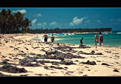 WILD BEACH (^^FANDI^^) Tags: leica vacation sky people cloud sun color detail tree beach water yellow strand licht solar sand focus dominican himmel beachlife palm punta tele caribbean cana 90mm sonne zon f25 hollyday mensen bavaro karibik summarit sirenis