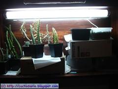 armario 26 Febrero (jarekcactus) Tags: indoor armario injertos