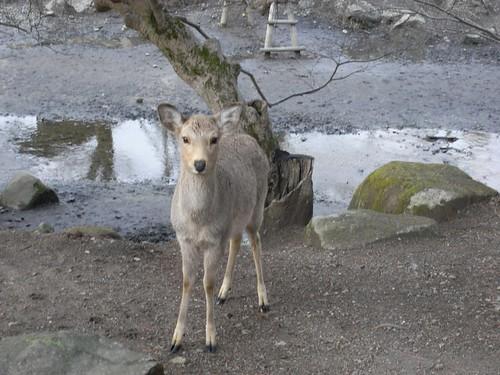 08-03-10-鹿のいる風景-05