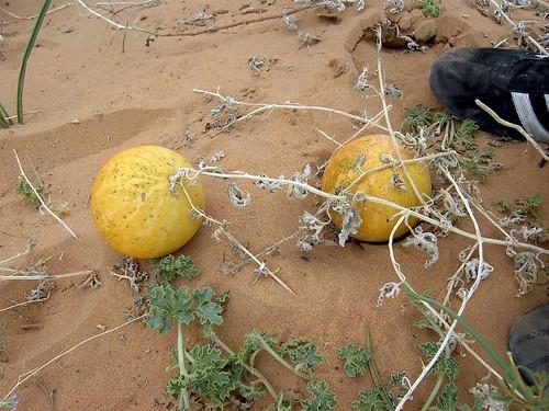 MERZOUGA-SAHARA-2008-8MP 041