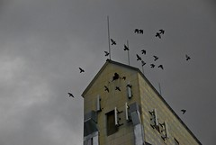 Birds 1 (facedorkface) Tags: bird birds scary pigeon overcast silo