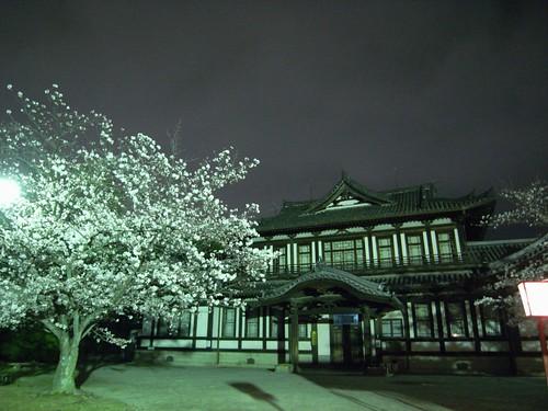 郡山城跡(夜桜)-05