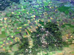 Patchwork (Paddy's point of view) Tags: india west rural rice paddy farming aerial agriculture bengal westbengal parganas north24parganas