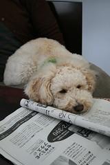 新聞を読むじゃじゃ