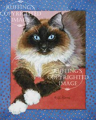 """""""Patiently Waiting"""" AER82 by A E Ruffing Ragdoll Cat"""