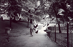 the running of the pigeons (chirgy) Tags: bw birds publicspace 35mm fun fuji glasgow pigeons running scan neopan chance analogue serendipity flap playpark decisivemoment ratswithwings flutter cn400 jjcg autaut pentaxespio120 pentaxespio120mi pointandshoot2008 bbcstaffcompetition