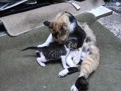 mother cat (ozgucc) Tags: cats love animals cat anne kedi sevgi masumiyet yavru merhamet